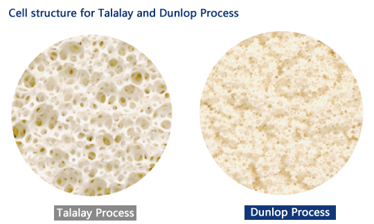 talalay vs dunlop